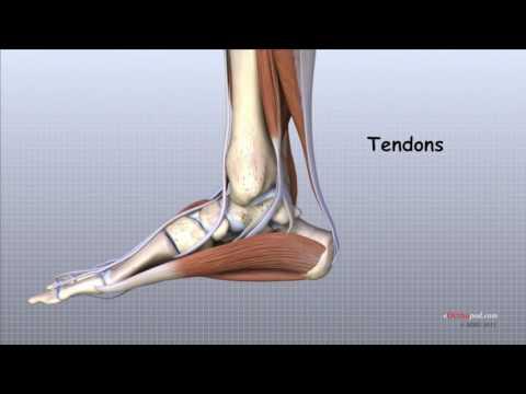 Deteriorarea ligamentului deltoid al gleznei - Genunchi