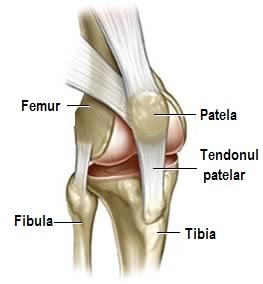 sac articular al tratamentului articulației genunchiului