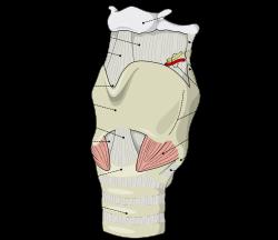 artrita articulației cricoide