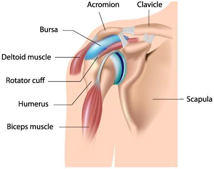 tratamentul articular cu bila calmează durerile articulare cu guta