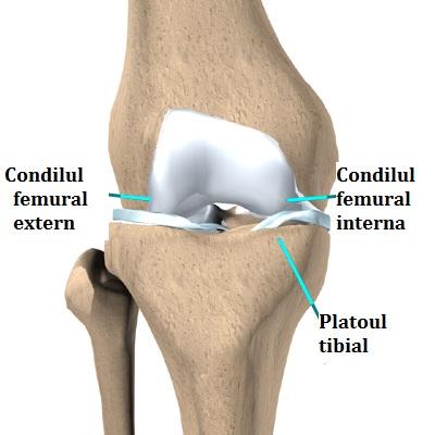durere în articulația tibiei Tratamentul cu artroza Vologda