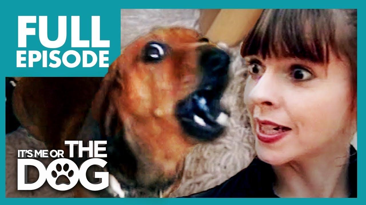 dachshunds de boală articulară