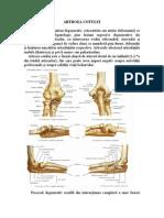 deteriorarea ligamentelor articulației cotului stâng tratament cu vitamine pentru artroză