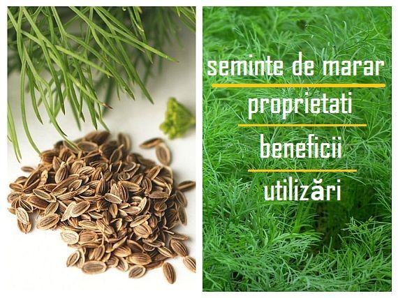 tratamentul articulațiilor semințelor de mărar