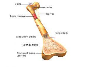 cum doare articulațiile