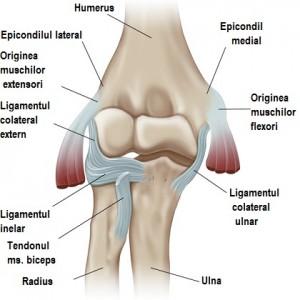 semne de osteochondroză a articulației umărului 911 cu condroitină și glucozamină