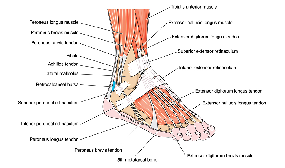 dureri de sold din cauza gleznei deteriorarea parțială a ligamentelor genunchiului