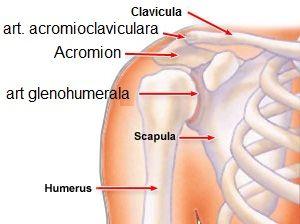 sinovita tratamentului articulației umărului drept