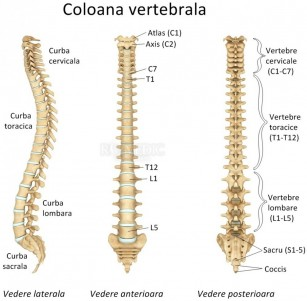 inflamația articulațiilor sacrului semne ale artritei cotului