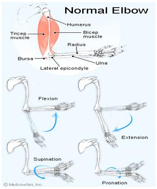 durere dimineața în articulațiile cotului amplipulează tratamentul artrozei
