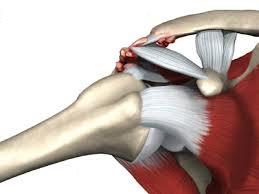 inflamația articulară claviculară a tendoanelor tratamentului periostic tratamentul articulației genunchiului durerii în interior