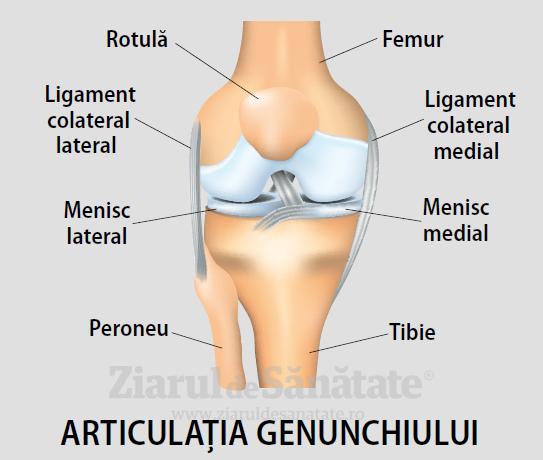 deteriorarea genunchiului uman articulațiile gleznelor doare