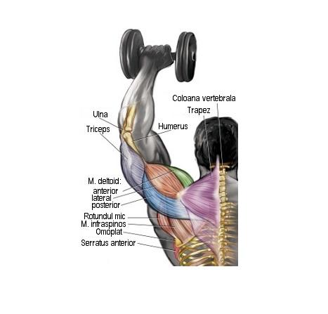 durere în articulațiile umărului în culturism umflarea tendonului genunchiului