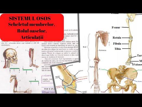 cauza durerii în articulația degetului pe mână efectul osteochondrozei asupra articulațiilor