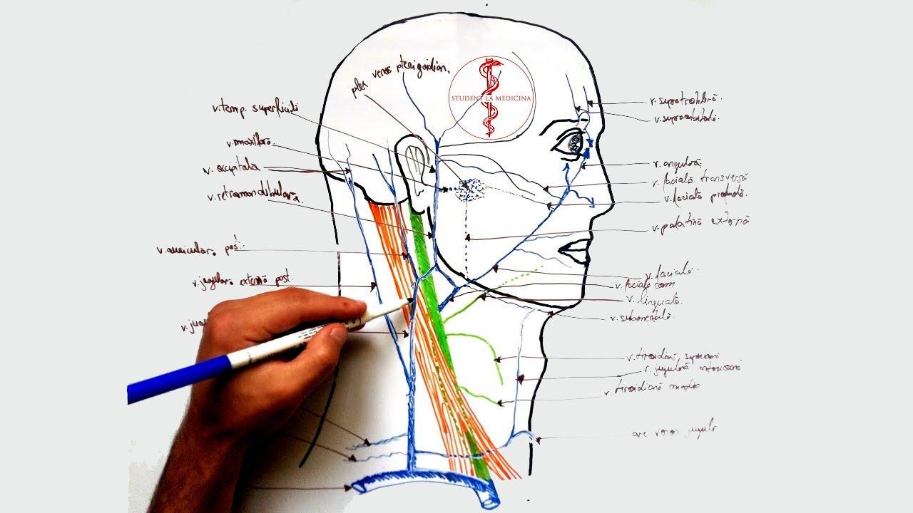 Articulațiilor articulare într-un vis rănit Unguent hirudo pentru articulații
