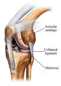 medicament pentru articulații și ligamente la culturisti cel mai puternic leac pentru durerile articulare
