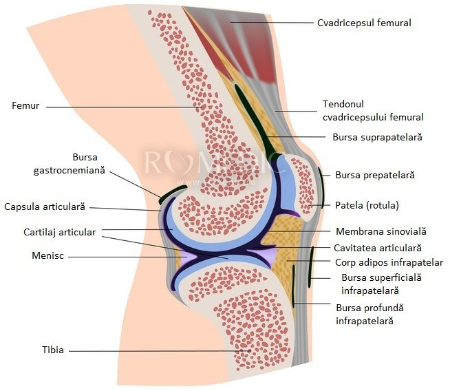 durere în articulația genunchiului stâng