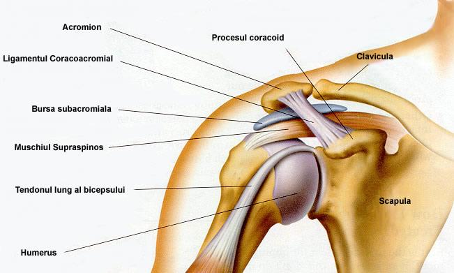 durere în articulația capului preparate de calciu în tratamentul artrozei