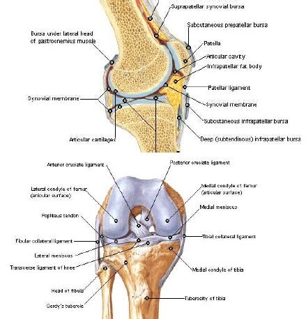 leziuni cu ligamente cruciate ale tratamentului articulației genunchiului