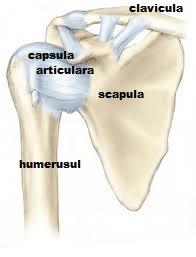 tratamentul capsulei articulare a articulației umărului
