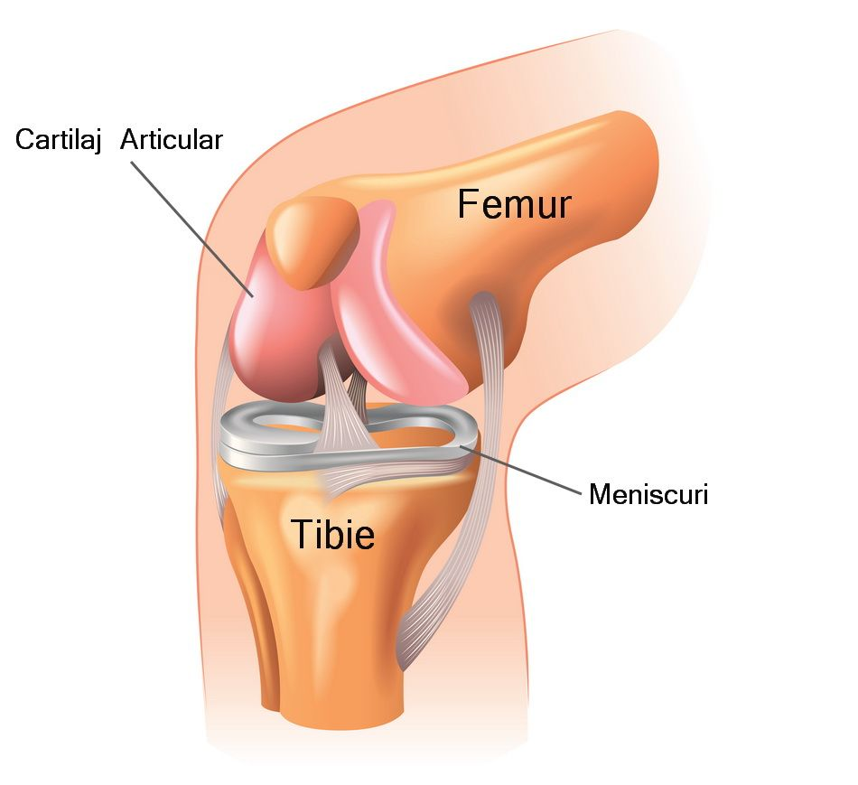 Durere severă la genunchi la cădere