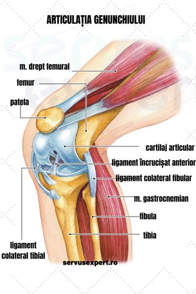 există o articulație în genunchi picioare umflate si dureroase