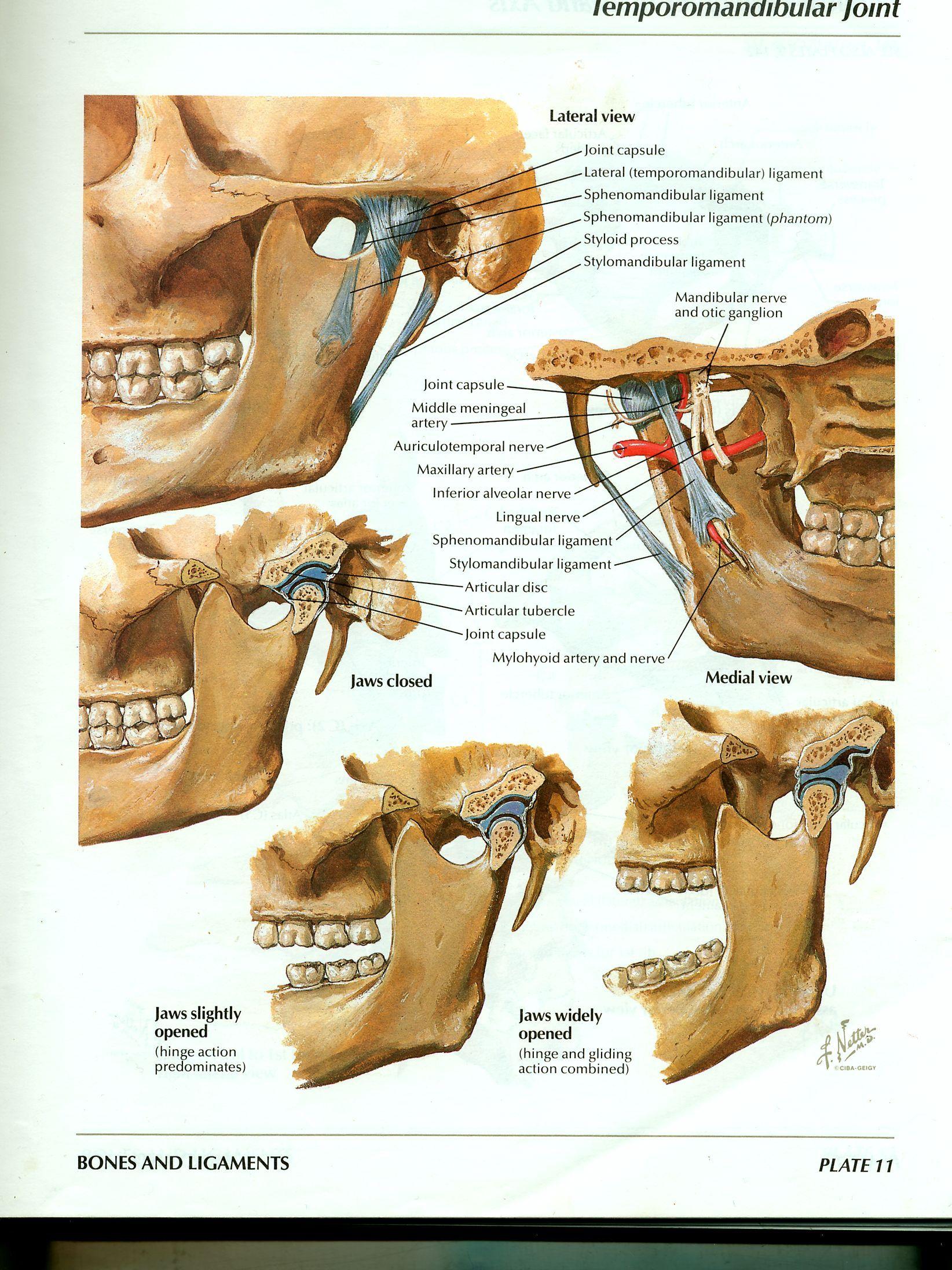 tratamentul inflamatiei halluxului cartilaj și țesut conjunctiv osos