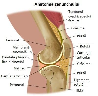 artroza 1-2 genunchi